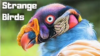 Download 10 Most Wonderful Birds In The World Video