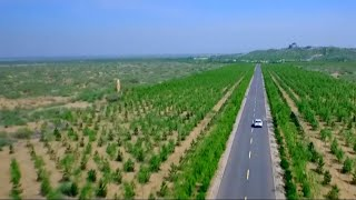 Download Can the 'Great Green Wall' stop desertification in China? Video