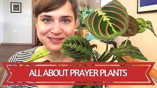 Download All About Prayer Plants Video