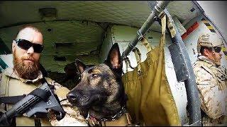 Download Navy SEAL & K9 Demo-BattleFrog Series Video