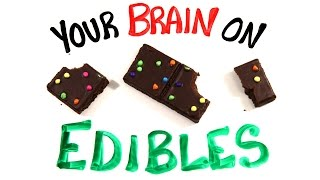 Download Your Brain On Edible Marijuana Video