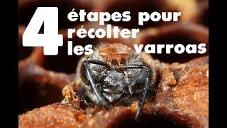 Download Les 4 étapes de la récolte des varroas pour le test VSH Video