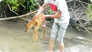 Download Kids Rescue Baby Deer From River Video