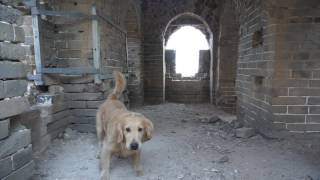 Download Hiking the Great Wall of China with my Dog Video