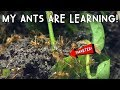Download OMG! MY ANTS ARE LEARNING! Video