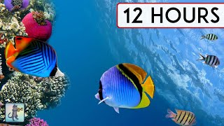 Download CORAL REEF AQUARIUM COLLECTION • 12 HOURS • BEST RELAX MUSIC • SLEEP MUSIC • 1080p HD #3 Video