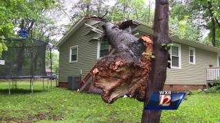 Download Trees crush cars, sheds in Greensboro Video