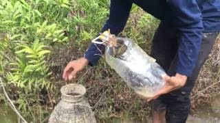 Download Amazing Human Catch Snake water Using The Bottle Net Trap How to Catch Snake in siem reab Video
