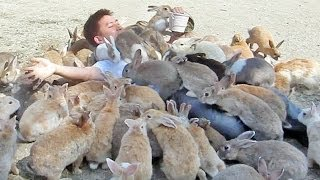 Download Guy Gets Smothered by Bunnies on Japan's Rabbit Island! Video
