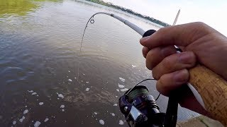 Download Hunting Down the FRANKENFISH in Washington D.C. (Bank Fishing the Tidal Basin) Video