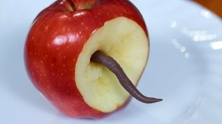 Download WORM IN APPLE! Video
