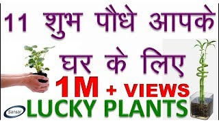 Download 11 शुभ पौधे आपके घर के लिए    Lucky Plants for your home    Good Luck Plants Video