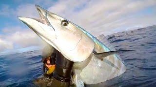 Download Подводная Охота. Трофейная Ваху на 40 кг. Video
