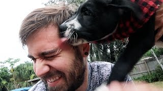 Download ATTACKED BY PUPPY KISSES!!! Video