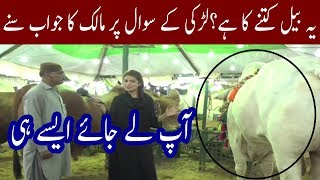 Download Funny Answer By Bull Owner | Amazing React By Girl | Chai Time Video