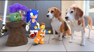 Download Real Life Animations vs Dogs Compilation! *Must see* Video