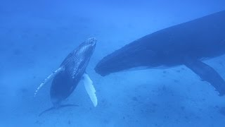 Download We Swam with the Whales! (Sailing La Vagabonde) Ep. 69 Video