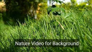 Download Beautiful Nature Grass Video for Background Video