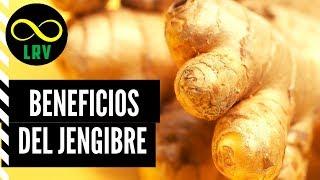 Download LOS 11 INCREÍBLES BENEFICIOS DEL JENGIBRE   LaRutaVerde Video