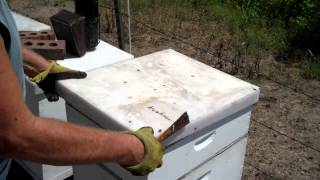 Download BeeKeeper what to do in August Video