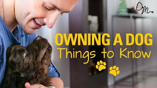 Download OWNING A DOG | Things to Know Before Getting a Puppy! | Doctor Mike Video