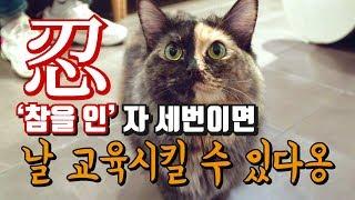 Download [고양이 교육]우리 고양이를 천재로 만들어보자 Video