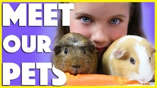 Download OUR PETS 🐶 Kids Guinea Pigs - Pet Parrot - Dog - tips on how to care for them :) Video
