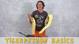 Download Reptil TV - Folge 92 - Tigerpython Basics Video