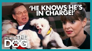 Download This Possessive Poodle Controls the Entire House | It's Me or the Dog Video