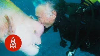 Download Aquatic Affection: How a Scuba Diver Found a Good Friend Under the Sea Video