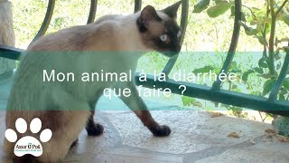 Download Mon animal a la diarrhée, que faire ? | Assur O'Poil Video