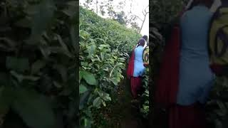 Download Six college girl from Assam Video