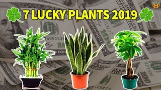 Download 7 Lucky Plants Bring Health, Wealth & Prosperity in 2019 - Know Everything Video