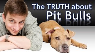 Download What you Need to Know about Pit Bulls Video