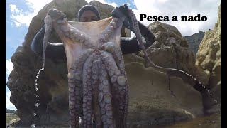 Download Pesca Submarina Pulpos gigantes 15 kilos. #21 Video