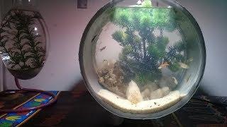 Download aquarium dari paralon bekas Video