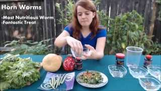 Download What Do Bearded Dragons Eat To Live A Healthy Life Video