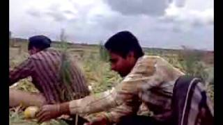 Download punjabi munde in melbourne fields-australia Video