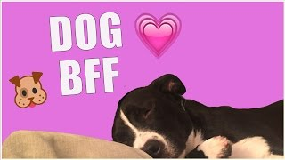 Download 5 Signs Your DOG is Your BFF Video