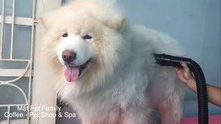 Download Biến hình Alaska thành sư tử trắng , muốn có gấu là phải xinh ::) ➤ Mật Pet Family Video