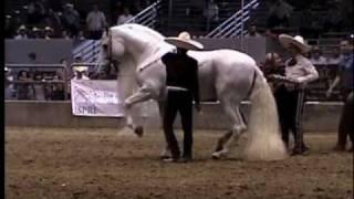 Download El Molinete de Ezequiel Pena en la Feria del Caballo Espanol Video