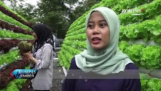 Download WISATA KEBUN SAYUR HIDROPONIK Video