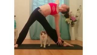 Download Yoga with Cats - Bloopers & Cute Clips Video