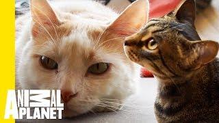 Download Mauhaus Cat Café Is A Cat Lover's Paradise! Video