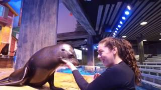 Download Our Sea Lion's Take On the Mannequin Challenge Video