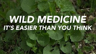 Download Wild Medicine — It's Easier Than You Think Video