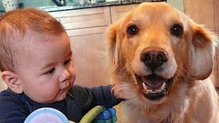 Download Dogs Loyalty to Baby Compilation Video