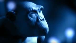Download Explaining The Tree of Life | #Attenborough90 | BBC Video