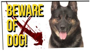 Download WEEKEND SCRAMBLE - Intruder Gets SHOOK By Family Dog! Video