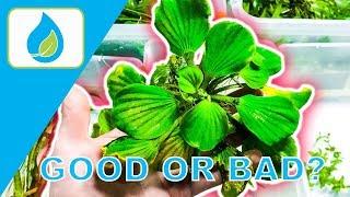 Download FLOATING AQUARIUM PLANT TIPS | 010 Video